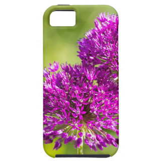 Two purple flowers of ornamental onions together iPhone 5 covers