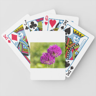Two purple flowers of ornamental onions together poker deck