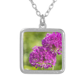 Two purple flowers of ornamental onions together silver plated necklace