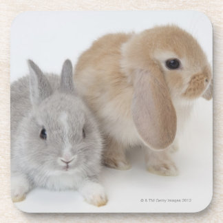Two rabbits.Netherland Dwarf and Holland Lop. Coaster