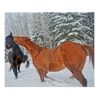 Two Ranch Horses Playfighting at Night in Winter Poster
