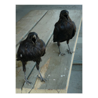 Two Ravens Cawing On a Bench Outside Poster