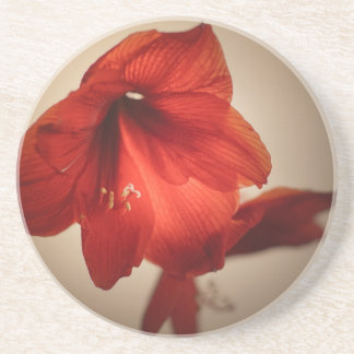 Two red amaryllis flowers coaster