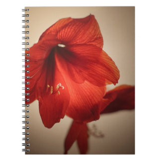 Two red amaryllis flowers notebook