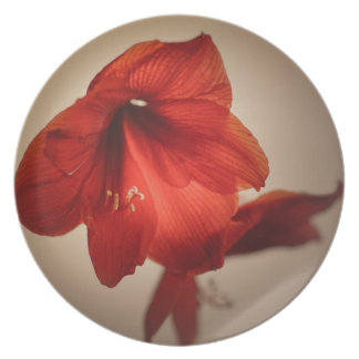 Two red amaryllis flowers plate
