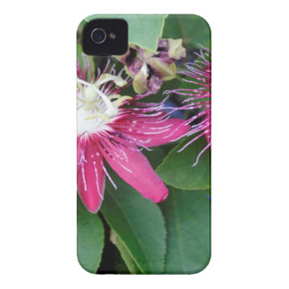 Two Red Passion Flowers Closeup Outdoors in Nature iPhone 4 Case