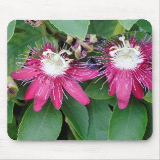 Two Red Passion Flowers Closeup Outdoors in Nature Mouse Pad