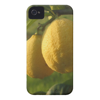 Two ripe lemons hanging on tree iPhone 4 Case-Mate case
