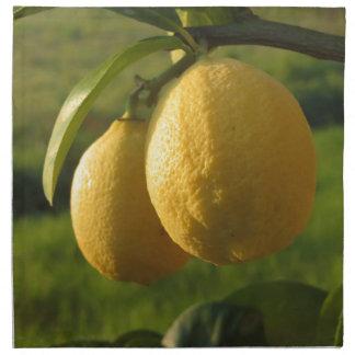 Two ripe lemons hanging on tree napkin