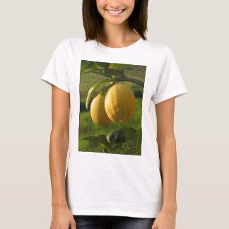 Two ripe lemons hanging on tree T-Shirt