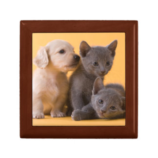 Two Russian Blue Kittens And Two Dachshund Puppies Keepsake Box