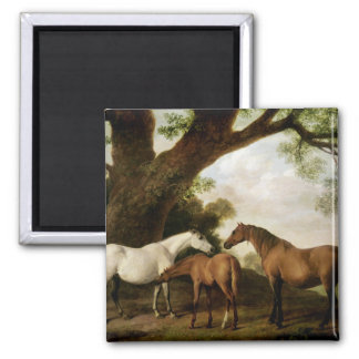 Two Shafto Mares and a Foal, 1774 Square Magnet