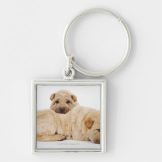 Two Shar Pei puppies sleeping, studio shot Silver-Colored Square Keychain