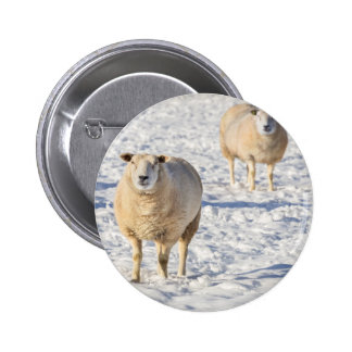 Two sheep standing in snow during winter 2 inch round button
