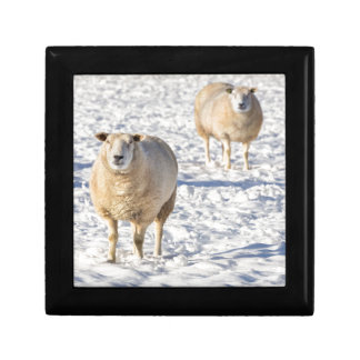 Two sheep standing in snow during winter gift boxes