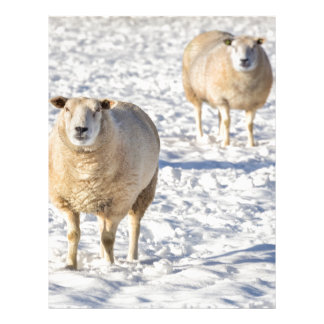 Two sheep standing in snow during winter letterhead