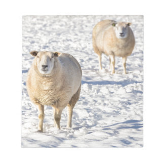 Two sheep standing in snow during winter notepad