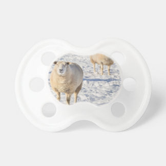 Two sheep standing in snow during winter pacifiers