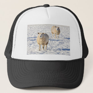 Two sheep standing in snow during winter trucker hat