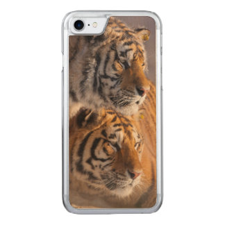 Two Siberian tigers together, China Carved iPhone 7 Case