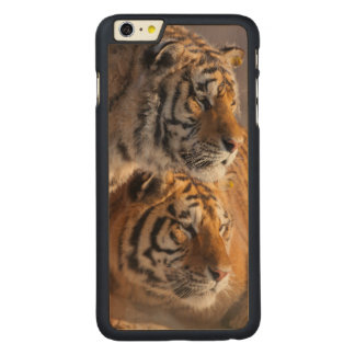 Two Siberian tigers together, China Carved Maple iPhone 6 Plus Case