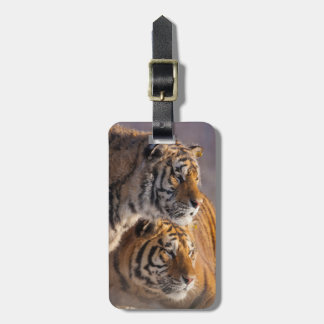 Two Siberian tigers together, China Luggage Tag