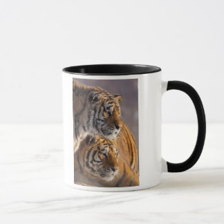 Two Siberian tigers together, China Mug