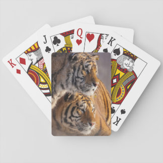 Two Siberian tigers together, China Poker Deck