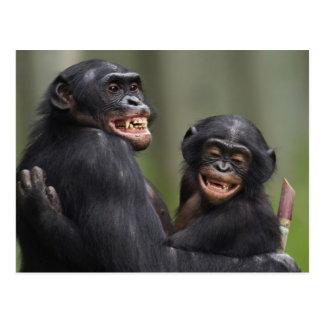 Two smiling Bonobos Postcard