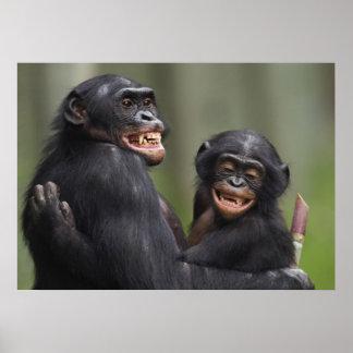 Two smiling Bonobos Poster