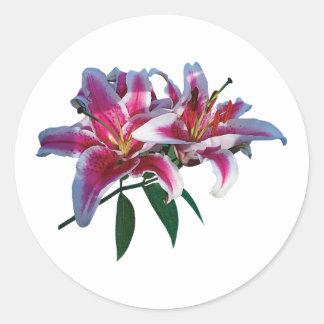 Two Stargazer Lilies in Sunshine Classic Round Sticker
