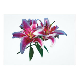 Two Stargazer Lilies in Sunshine Invitation