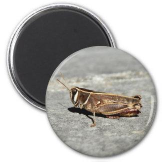 Two-Striped Grasshopper Magnet
