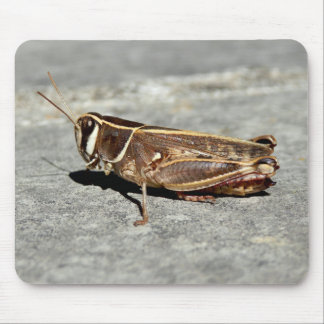 Two-Striped Grasshopper Mouse Mat Mouse Pad
