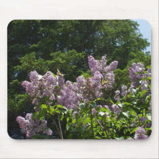 Two Swallowtail Butterflies on a Lilac Bush Mouse Pad