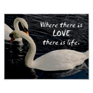 Two Swans on Lake Poster
