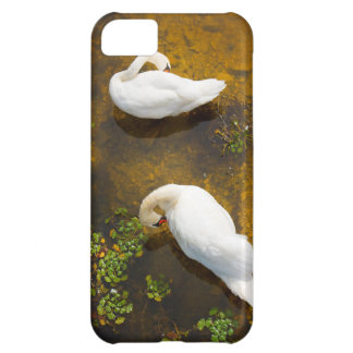 Two swans with sun reflection on shallow water iPhone 5C covers