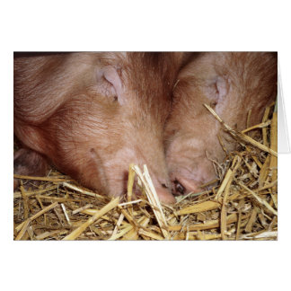 Two Sweet Sleeping Pigs Photograph - Blank Cards
