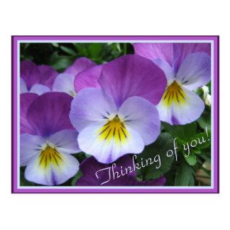 Two tones purple violas postcard