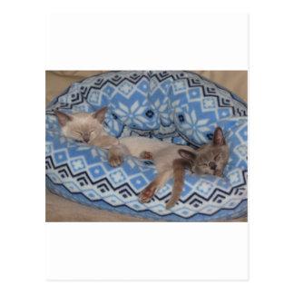 Two Tonkinese kittens sleeping Postcard