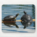 Two Turtles at the Turtle Bar