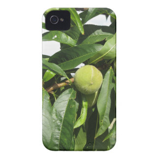 Two unripe green peaches hanging on a peach tree iPhone 4 case
