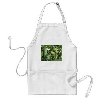 Two unripe green peaches hanging on a peach tree standard apron