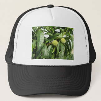 Two unripe green peaches hanging on a peach tree trucker hat