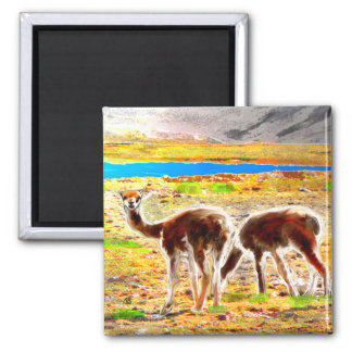Two Vicunas Andes Mountains Peru Square Magnet