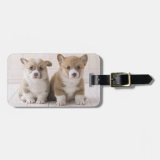 Two Welsh Corgi Sitting Luggage Tag