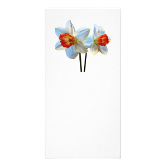 Two White And Orange Daffodils Card