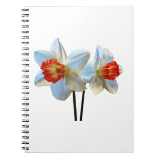Two White And Orange Daffodils Spiral Notebook
