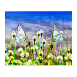 Two White Butterflies in a Yellow Flower Meadow Acrylic Print