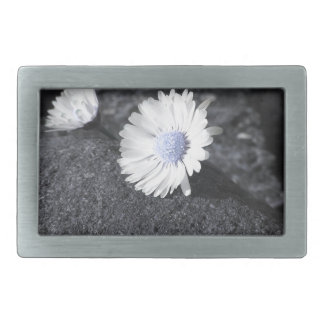 Two white daisies lying on the stone at sunset belt buckles